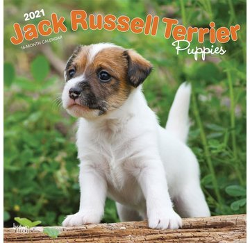 Browntrout Jack Russell Terrier Puppies Calendar 2021