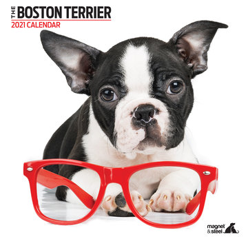 Magnet & Steel Boston Terrier Modern Calendar 2021