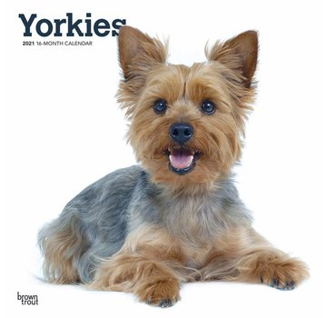 Browntrout Yorkshire Terrier Calendar 2021