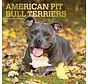 American Pit Bull Terrier Calendrier 2021