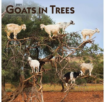 Browntrout Goats in Trees Kalender 2021