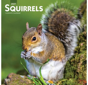 Browntrout Squirrel Calendar 2021