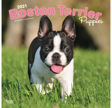 Browntrout Boston Terrier Puppies Calendar 2021