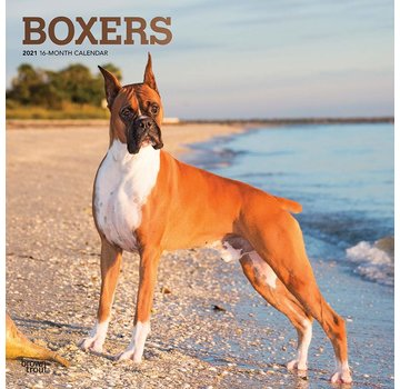 Browntrout Boxer Calendrier 2021
