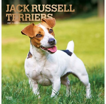 Browntrout Jack Russell Terrier Calendar 2021