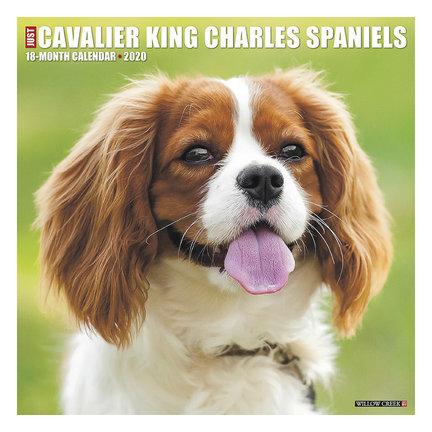 Cavalier King Charles Spaniel Kalenders 2021
