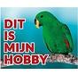 Groene Edelpapegaai Waakbord - Dit is mijn Hobby