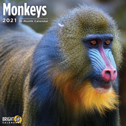 Monkeys Calendars