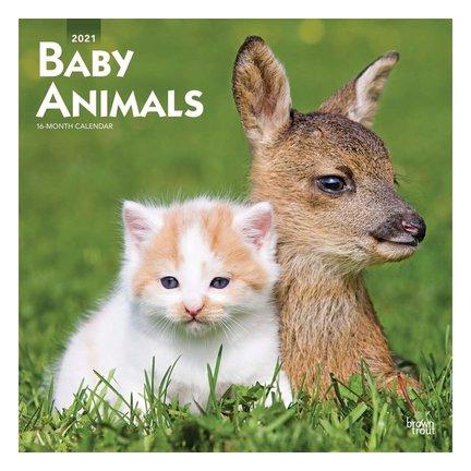Calendrier Animaux bébé