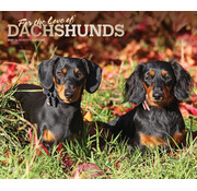 Browntrout Dachshund Calendario 2021 Deluxe