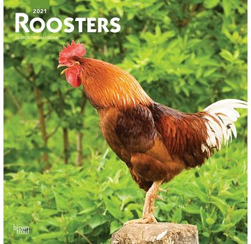 Browntrout Roosters Calendar 2021