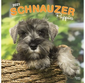 Browntrout Schnauzer Chiots Calendrier 2021