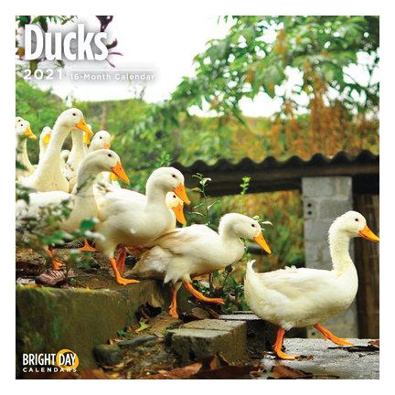 Duck Calendar