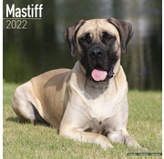 Avonside English Mastiff Calendario 2022