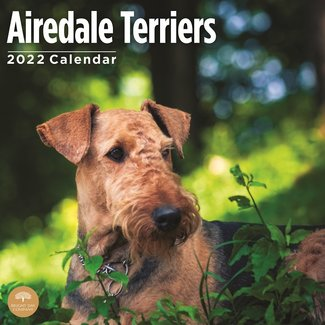 BrightDay Airedale Terrier Calendar 2022