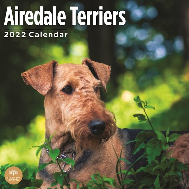 BrightDay Airedale Terrier Kalender 2022
