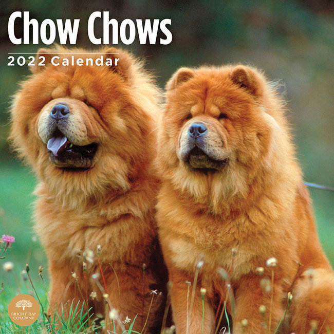 BrightDay Chow Chow Kalender 2022