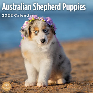 BrightDay Chiots berger australien Calendrier 2022