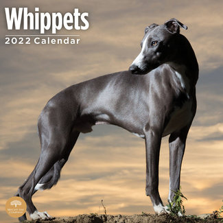 BrightDay Whippet-Kalender 2022