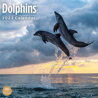 BrightDay Dolphins Kalender 2022