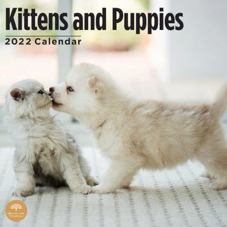 BrightDay Kittens and Puppies Calendar 2022