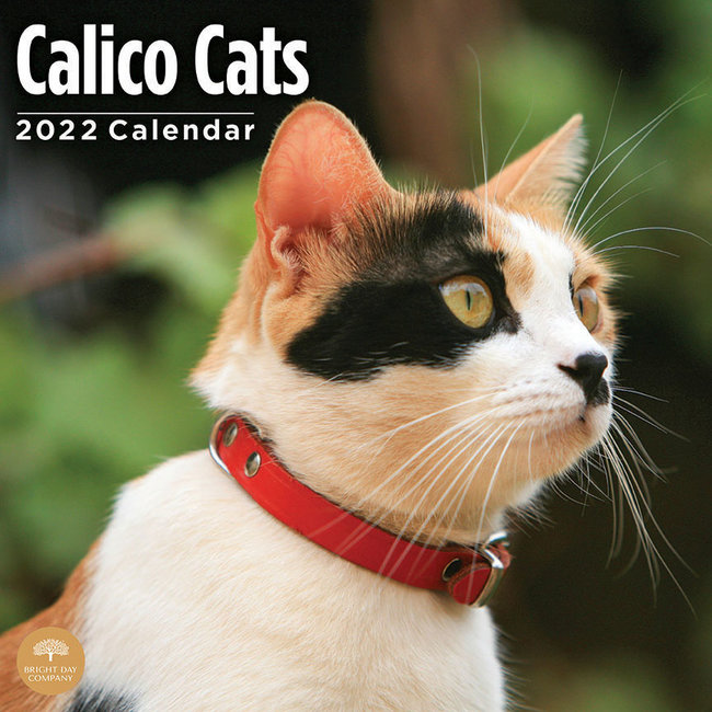 BrightDay Calico Cats Kalender 2022