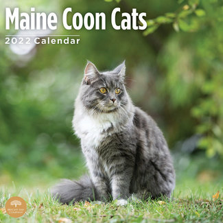 BrightDay Maine Coon Calendar 2022