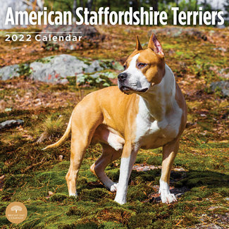 BrightDay Calendrier American Staffordshire Terrier 2022