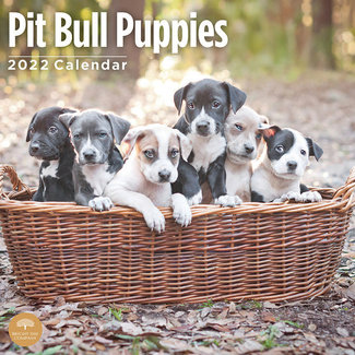 BrightDay American Pit Bull Terrier Puppies Calendar 2022