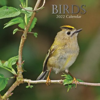 The Gifted Stationary Birds Kalender 2022