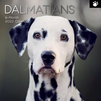 The Gifted Stationary Dalmatier Kalender 2022