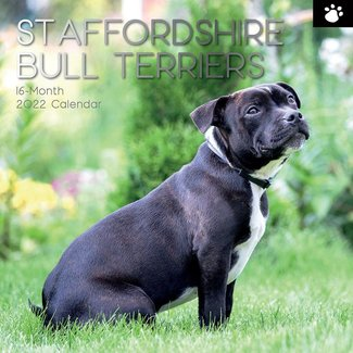 The Gifted Stationary Staffordshire Bull Terrier Kalender 2022