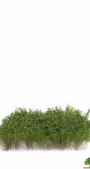 MBR model Struiken donker groen