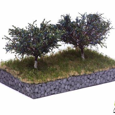 MBR Fruitbomen