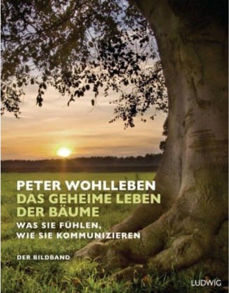 Das Geheime leben der Baume - Bildband