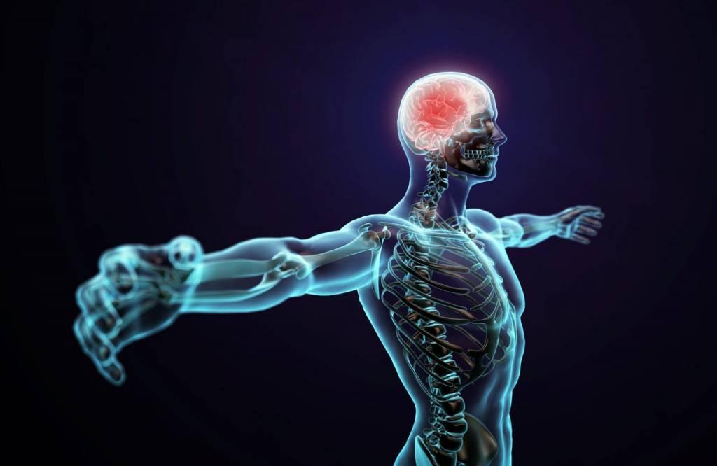 Wat doet CBD met je lichaam? Bekijk hier de Wetenschappelijke uitleg waarom