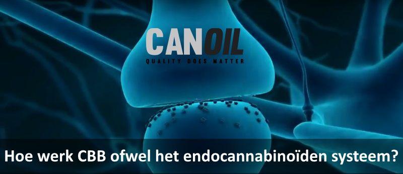 Hoe werk CBB ofwel het endocannabinoïden systeem?