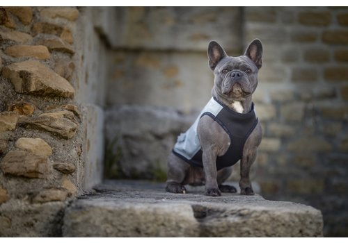 Cool vests for dogs