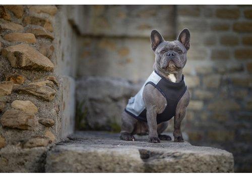 Gilets cool pour chiens
