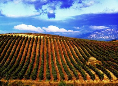 Wine by Country