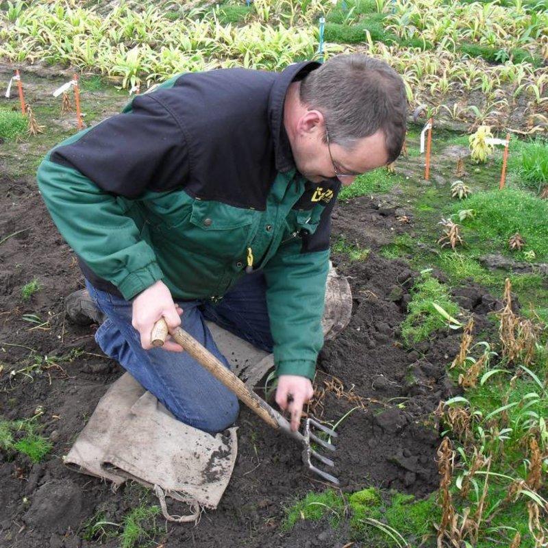 Digging Fork 4 tines