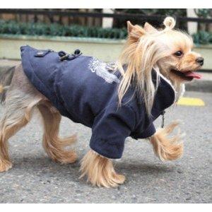 Puppy Angel Barmy army Jumper