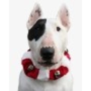 Doxtasy Jingle Collar Red White SMALL