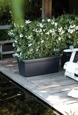 Elho2021 Green Basics Garden xxl