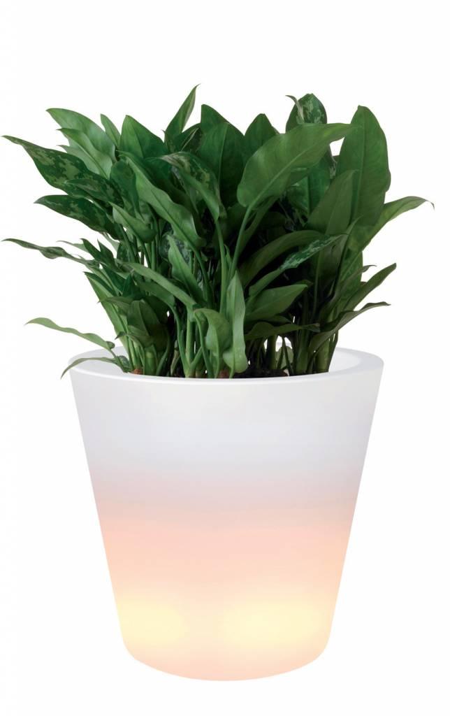 Elho Pure Straight LED Light