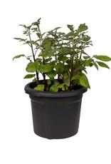 Elho green basics aardappelpot