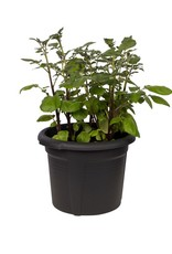 Elho2021 green basics aardappelpot