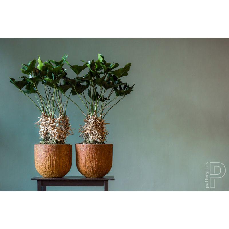 Pottery Pots Cody