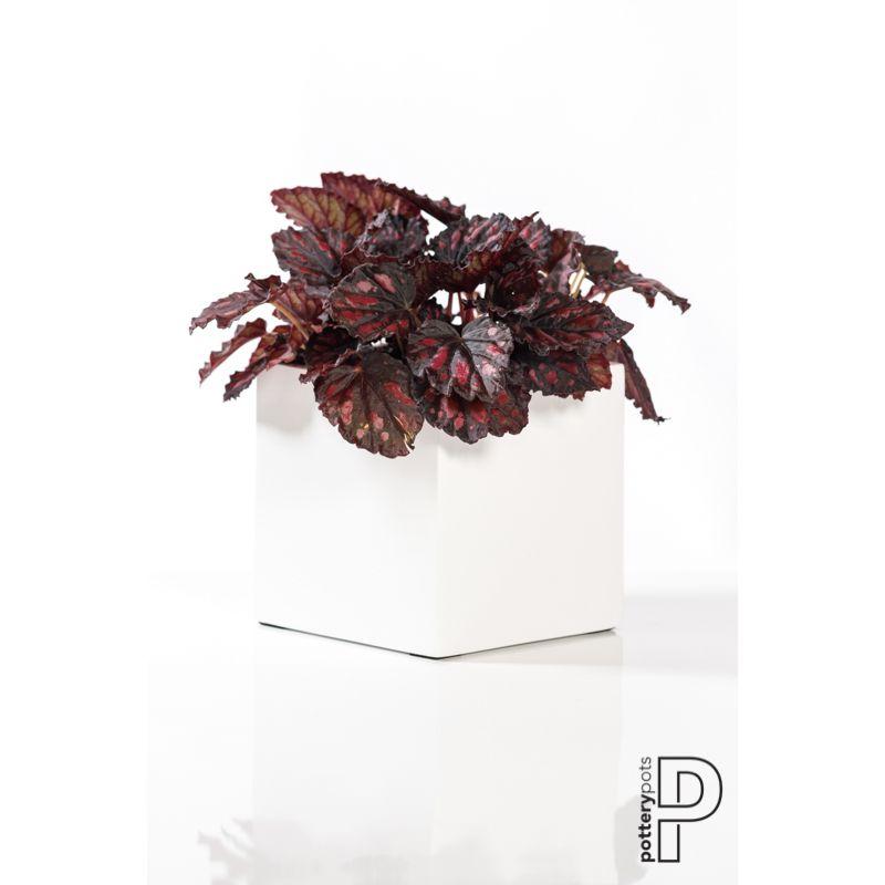 PotteryPots 2021 Fleur