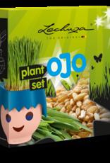 Lechuza OJO plantenset